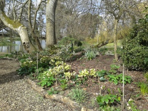 Rhododendron Dell beginning to be planted up