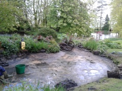 Cleaning the Water Garden