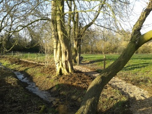 Wood-chip path down at Bath Walk