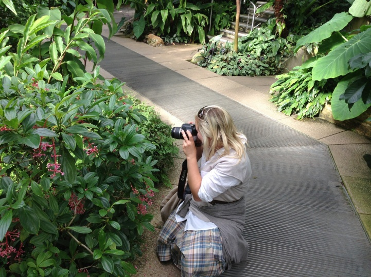 Samantha Jane photographing Medinilla species at Kew Gardens