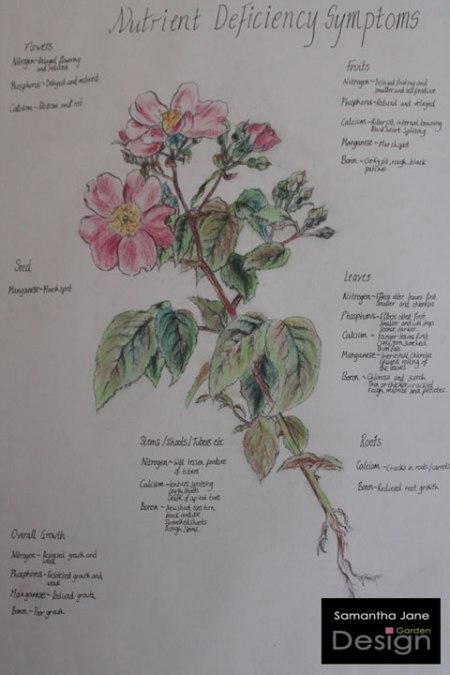 samantha-jane-garden-design-pressings-1