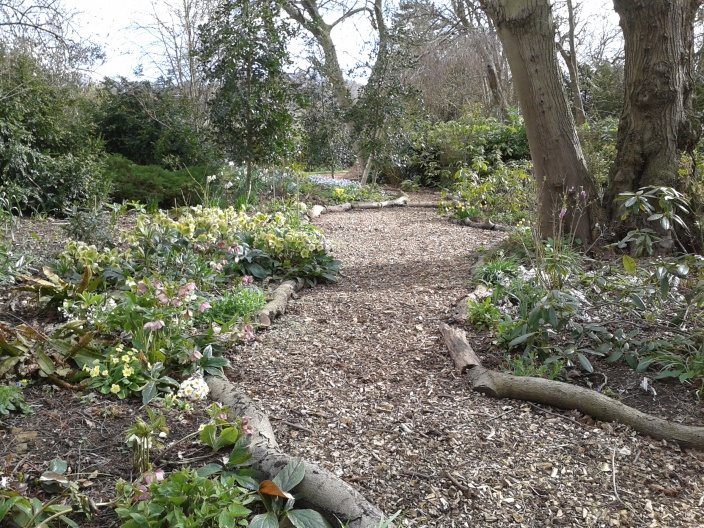 The Rhododendron Dell forming