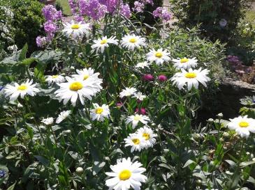 Herbaceous Borders planting
