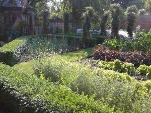 Summer in the Kitchen Garden