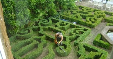 Samantha trimming a formal box parterre using an electric hedge trimmer
