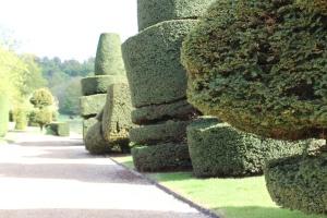 Topiary freshly cut